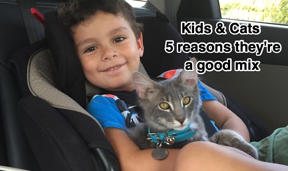 Kids & Cats — 5 reasons they're a good mix